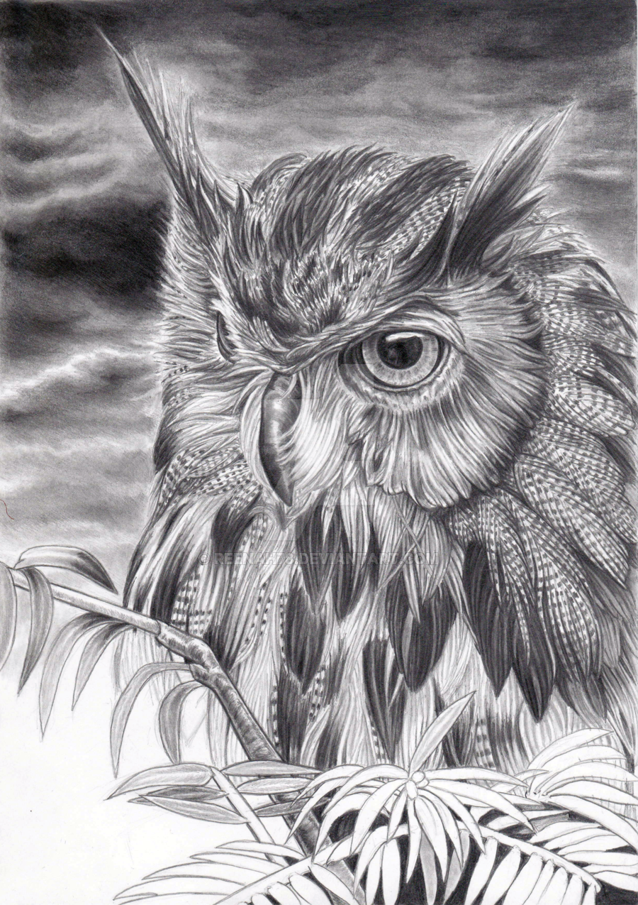 Drawn owl owel Eared by Long Eared Owl