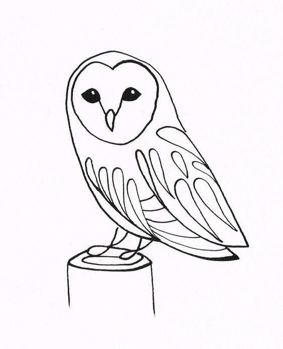 Drawn owl owel Drawing Barn Owl Drawing owl