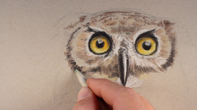 Drawn owl pastel Now Stokes undertones the How
