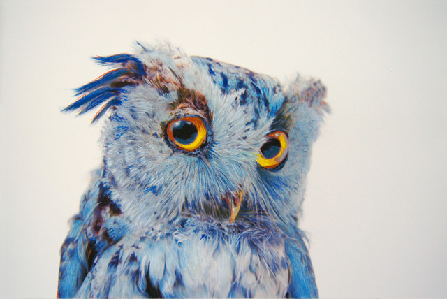 Drawn owl pastel New pencils using He created