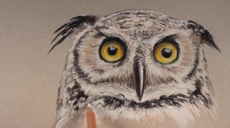 Drawn owl pastel The on continues of areas