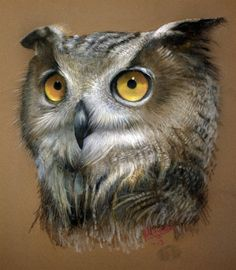 Drawn owl pastel Pastel Pinterest Snow owl <3