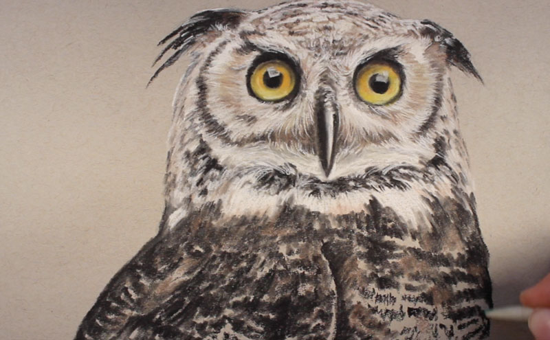 Drawn owl pastel A variety and to Pencils