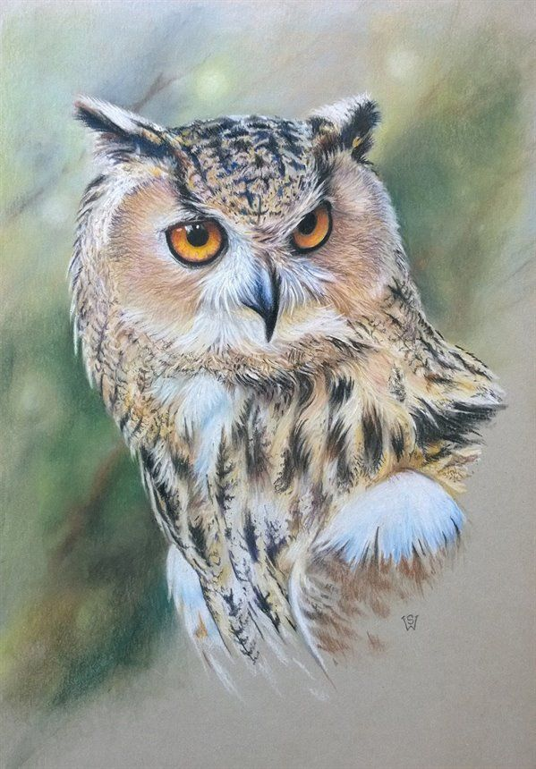 Drawn owl pastel Eagle Pinterest on pencils Best