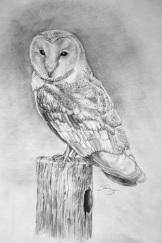 Owlet clipart pencil Landscapinggallery Print draw Owl on