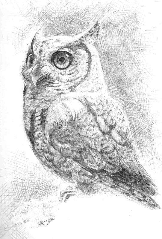 Brown Hawk Owl clipart pencil drawing Drawing Pinterest by of Drawings