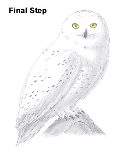 Drawn owl snowy owl #10