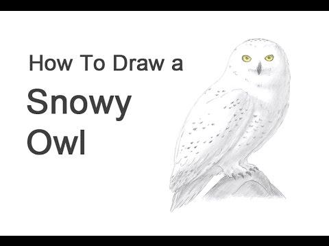 Drawn owl snowy owl #7