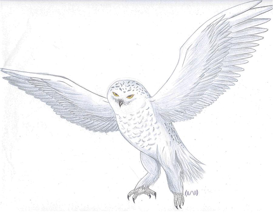 Drawn owl snowy owl #15