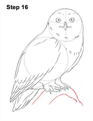 Drawn owl snowy owl #14