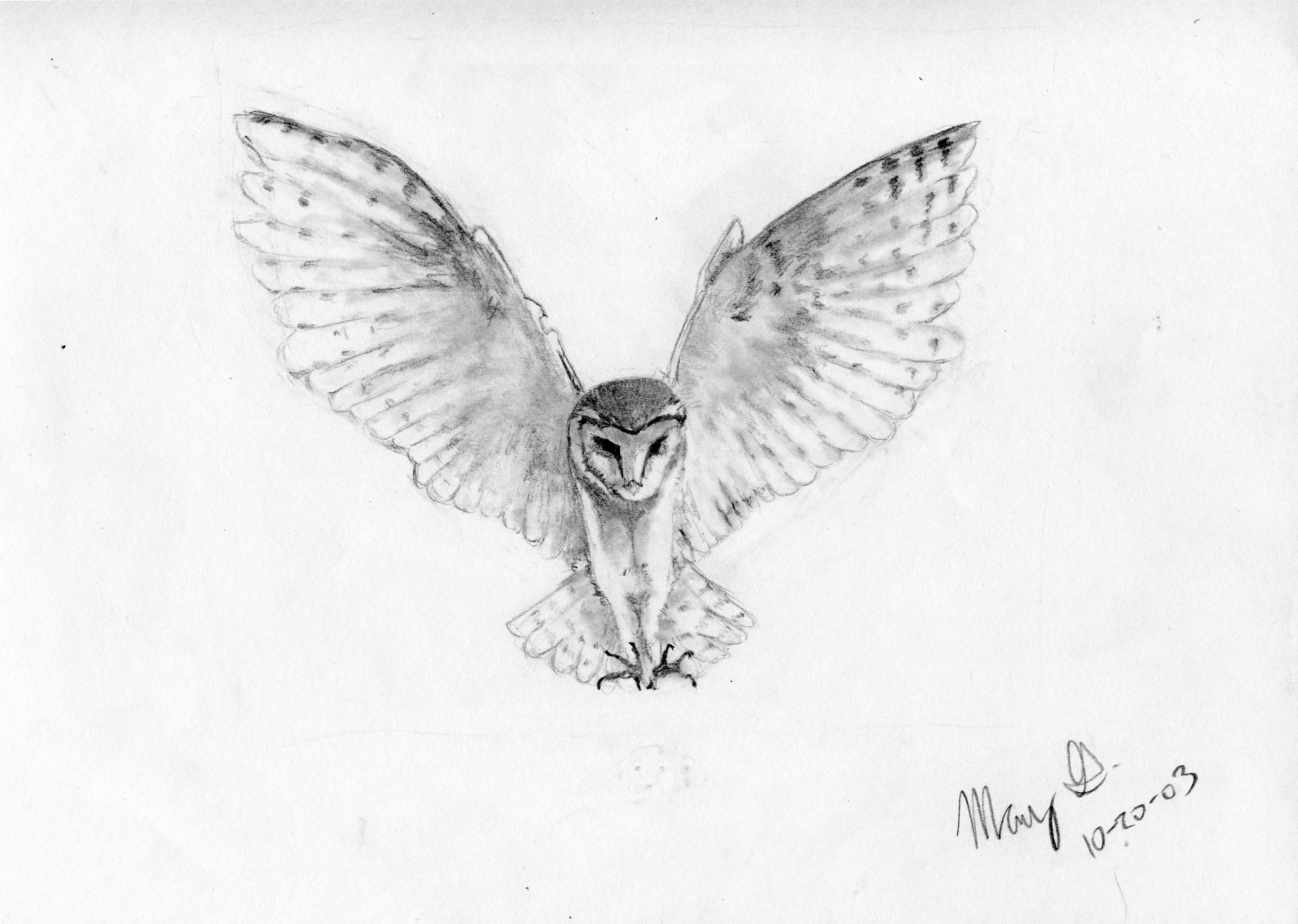 Drawn owl snowy owl #13