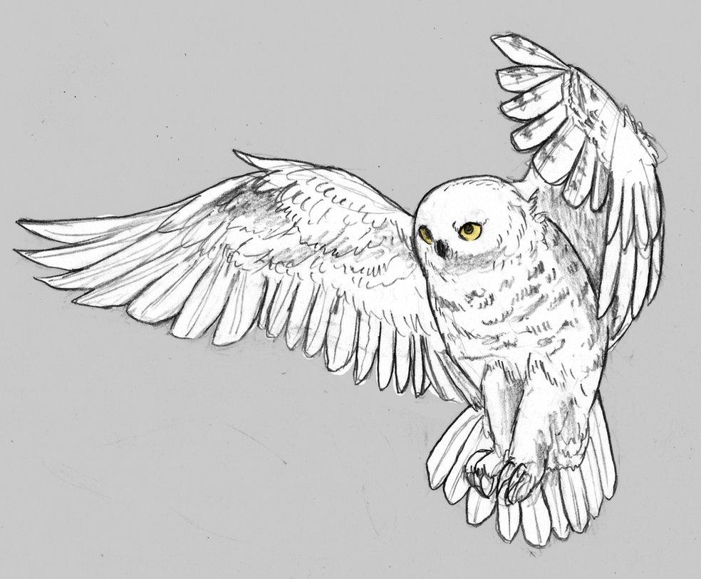 Drawn owl snowy owl #9