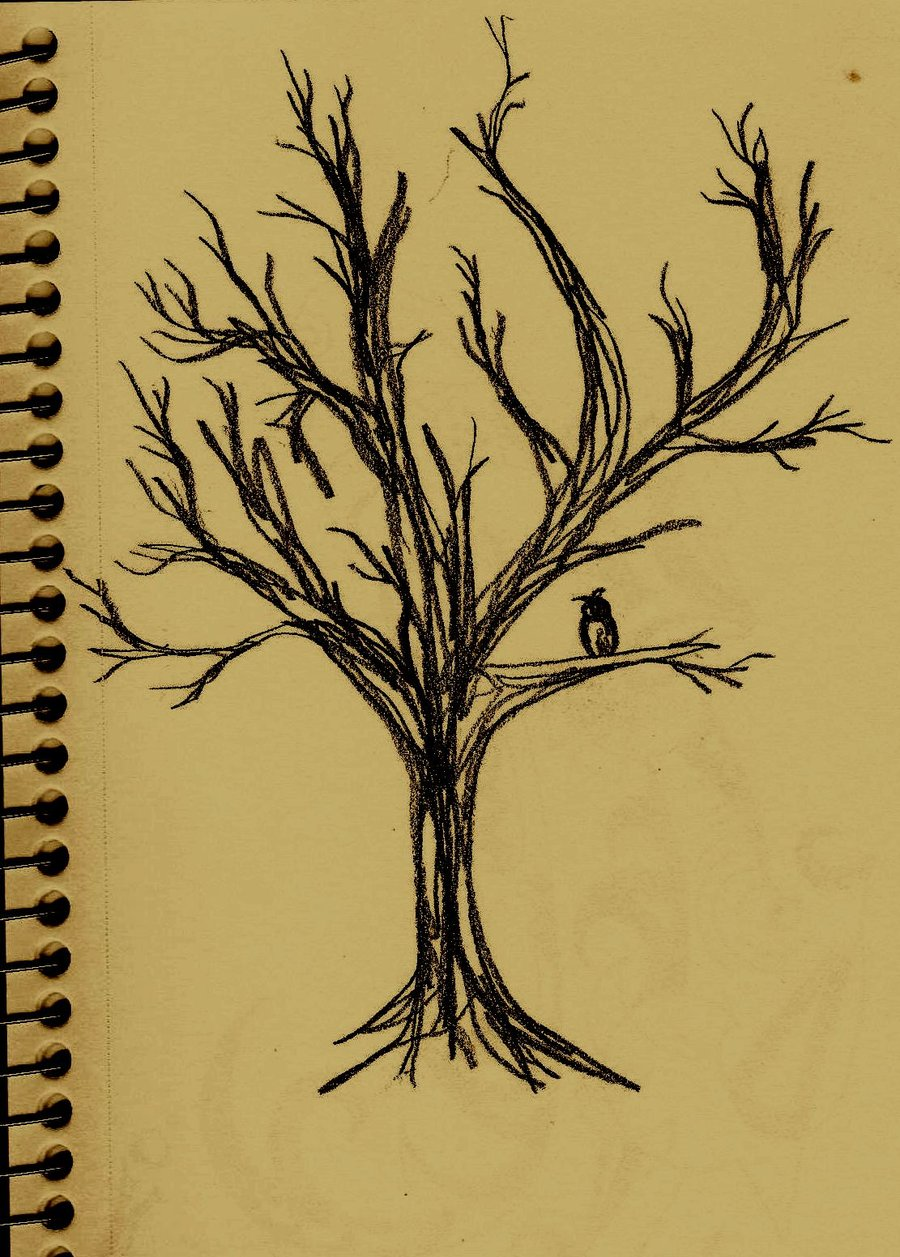 Drawn owl tree drawing A a How photo#15 tree