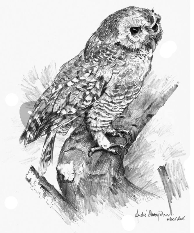 Drawn owl wood By prints Andre Wood owl