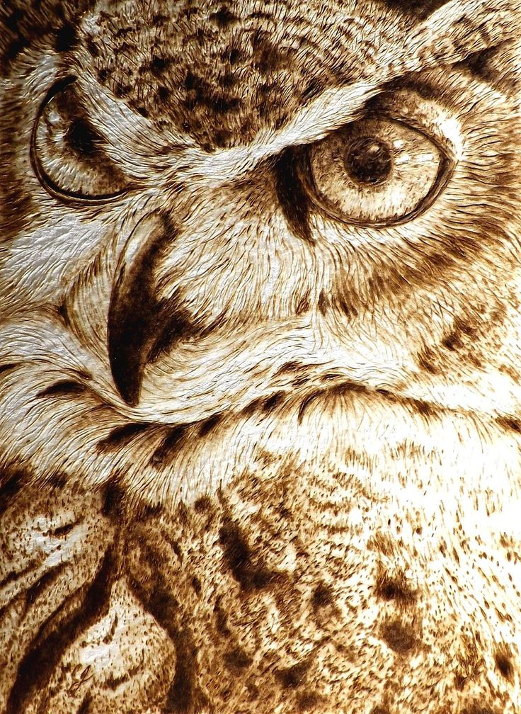 Drawn owl wood WOOD pyrography/woodburning BURNING drawing animal