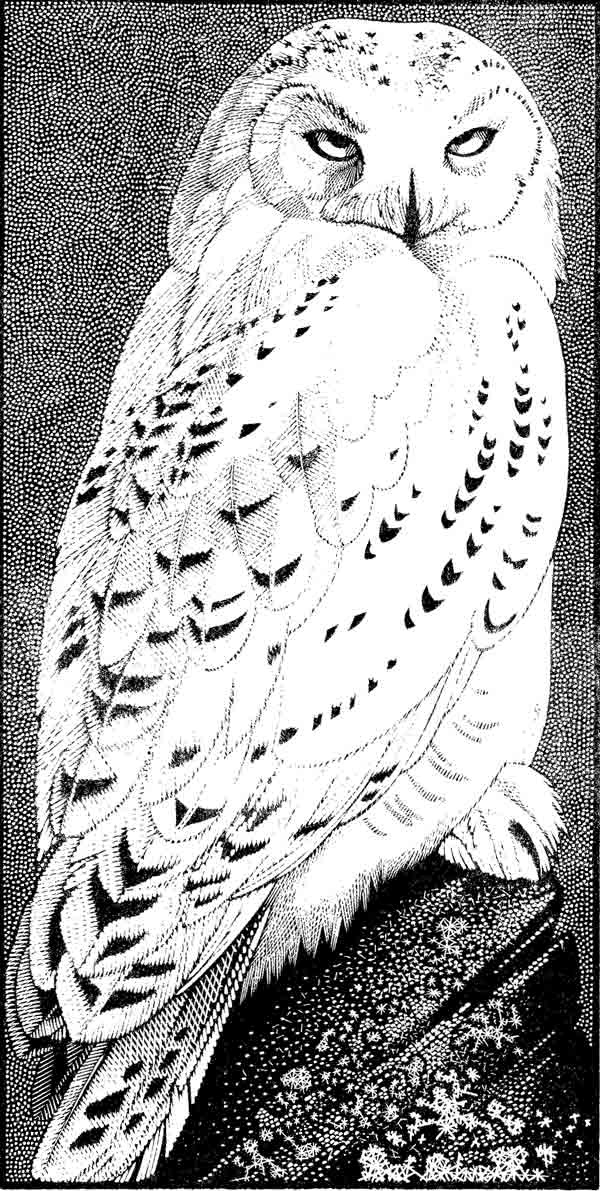 Drawn owl wood ~ ~ Colin The The