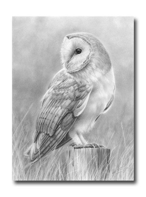 Owlet clipart pencil On 51 like Barn the