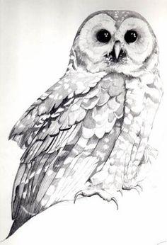 Owlet clipart pencil (Megascops  Owl Pencil Image