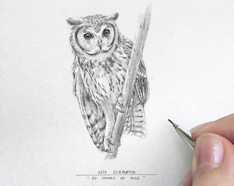 Owlet clipart pencil Owl Christmas art sale drawing