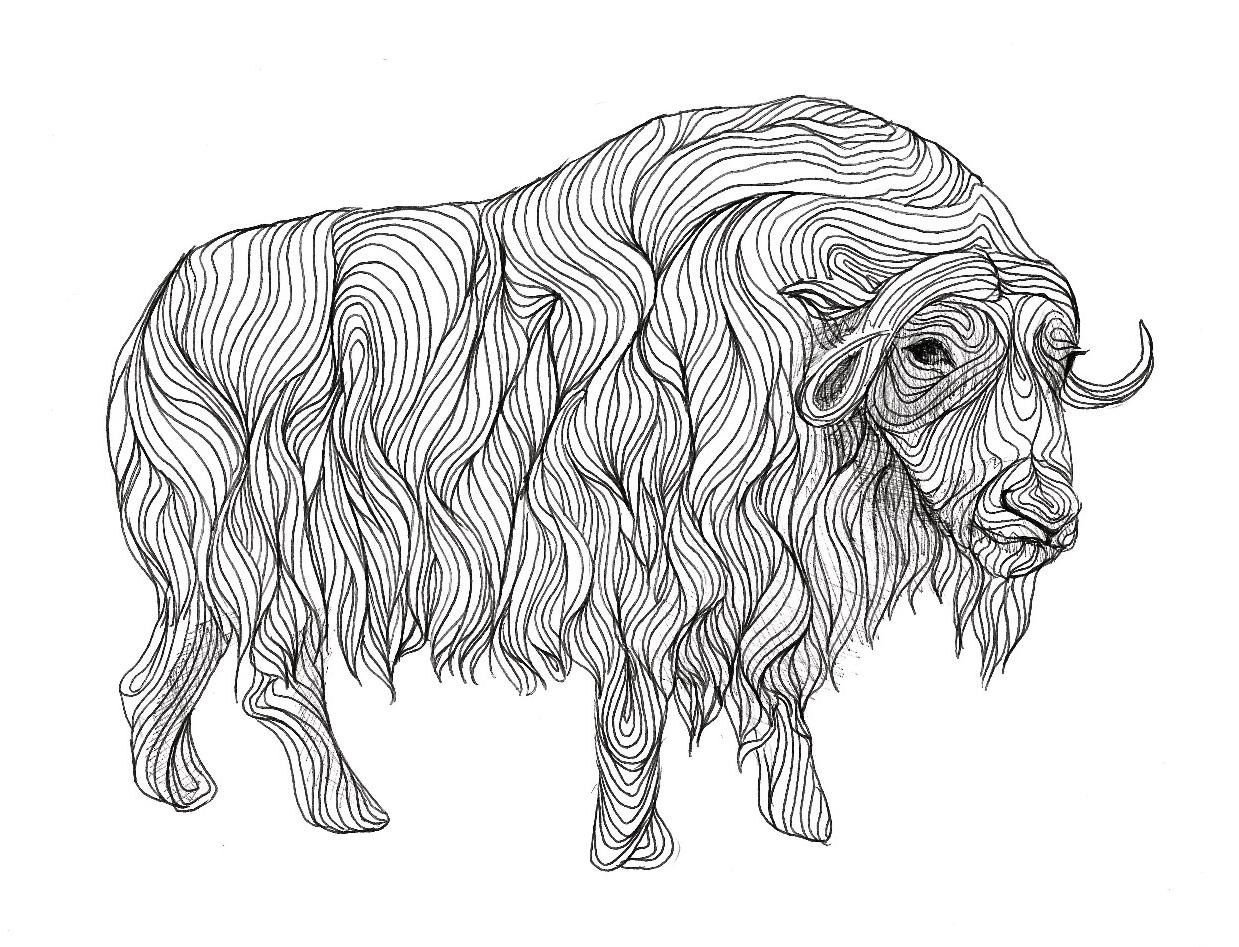 Drawn ox Art Ox Drawing Realistic Images