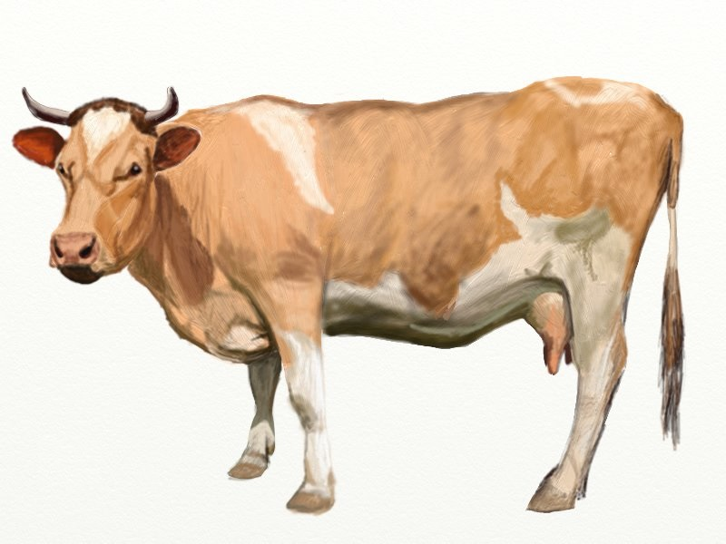 Drawn cattle realistic #2