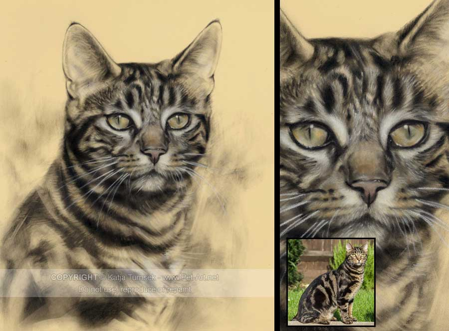 Drawn painting cat #14