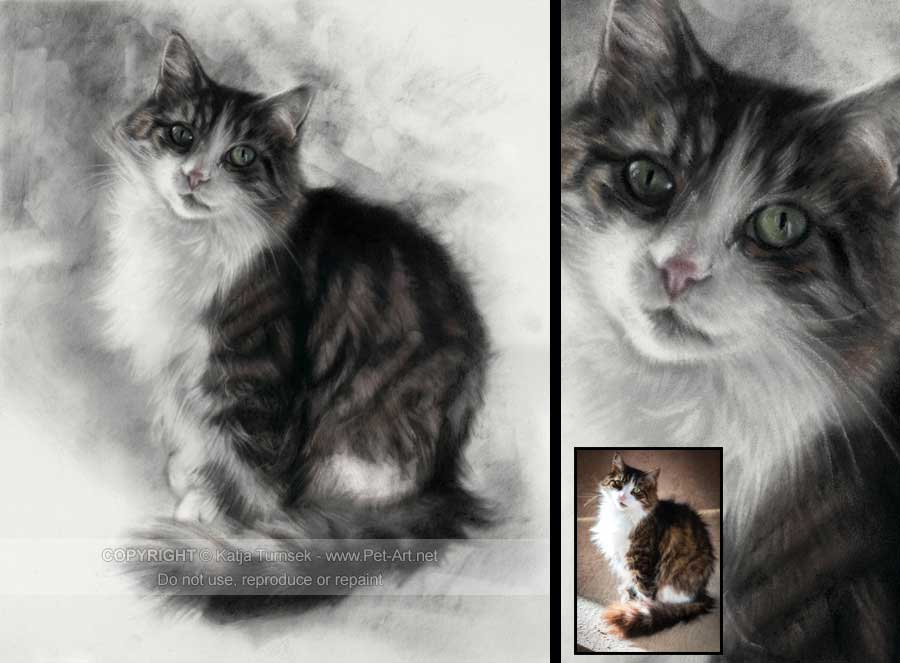 Drawn painting cat #10