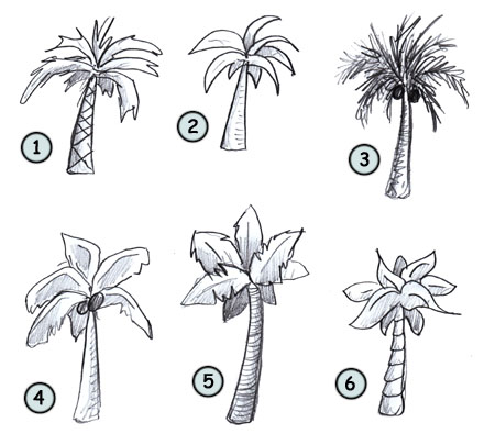 Drawn palm tree #1
