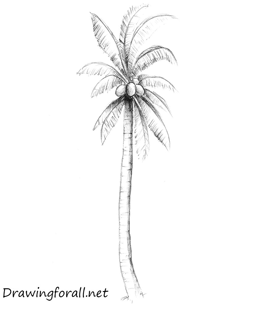 Drawn palm tree #8