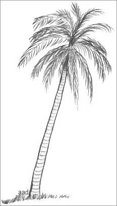 Drawn palm tree #11