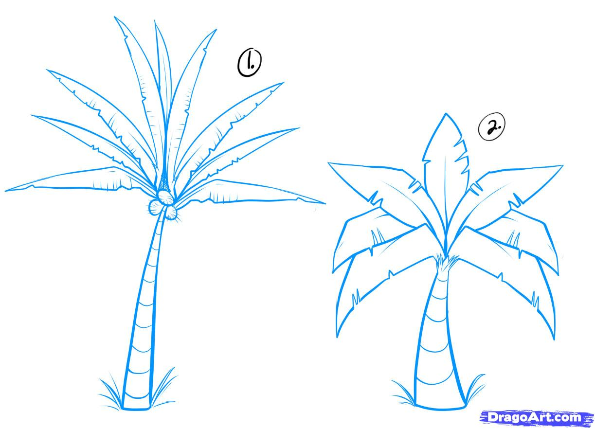 Drawn palm tree #15