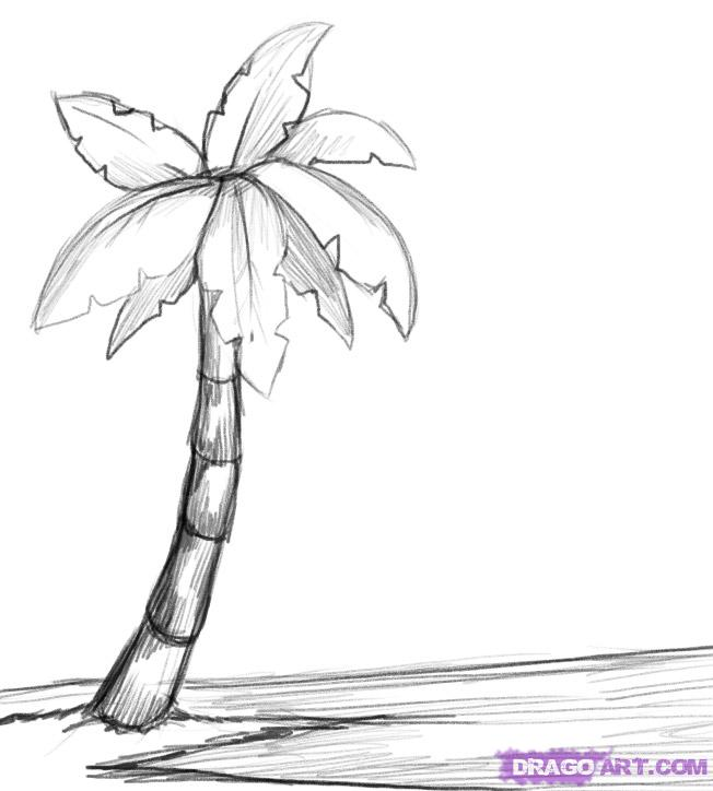 Drawn palm tree #3