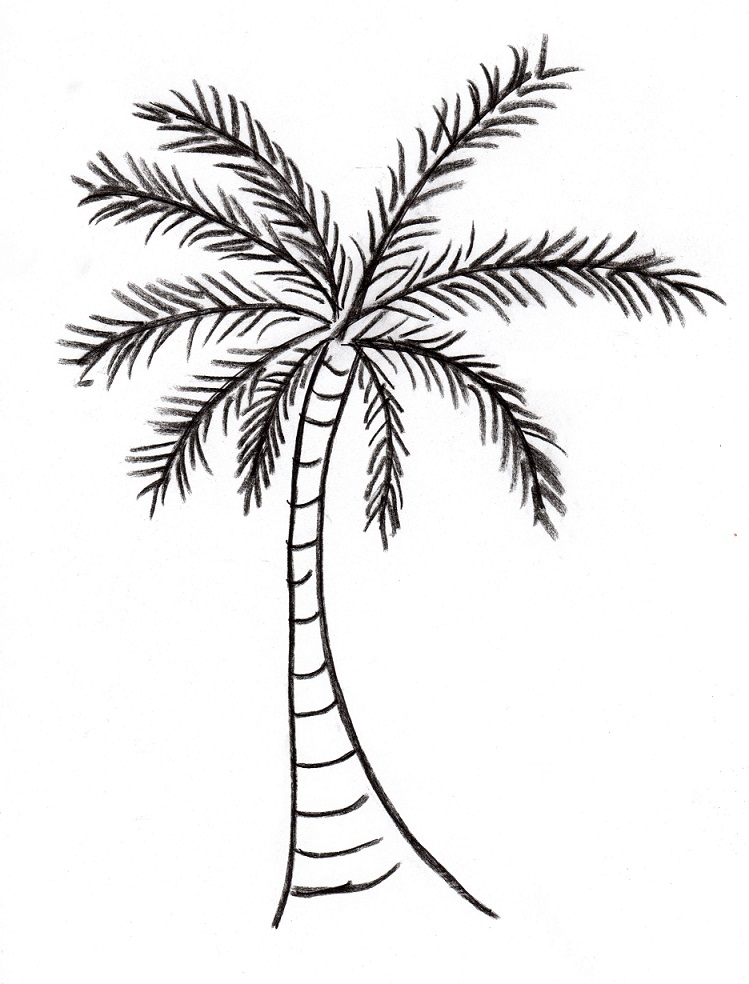 Drawn palm tree #9