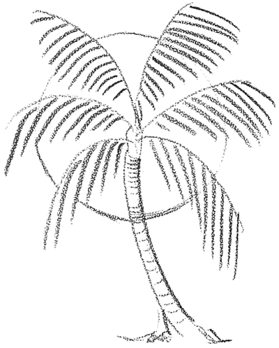 Drawn palm tree #4