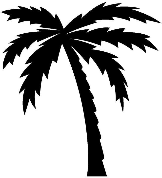 Drawn palm tree black and white #11