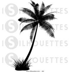 Drawn palm tree black and white #6