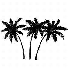 Drawn palm tree black and white #9