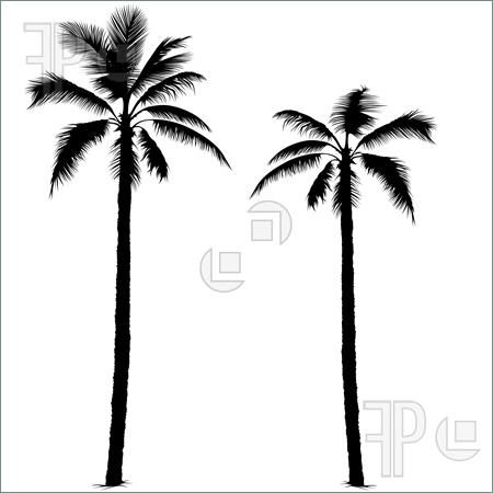 Palm Tree clipart curved Pinterest this possibilities 101 tattoo