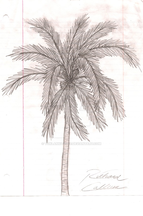 Drawn palm tree hand drawn #3
