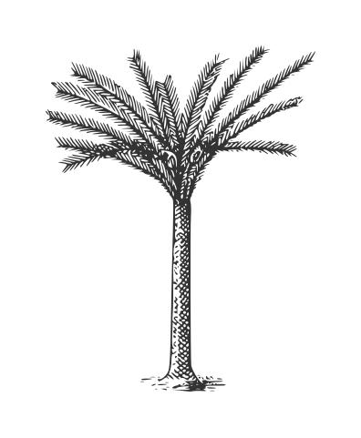 Drawn palm tree hand drawn #1
