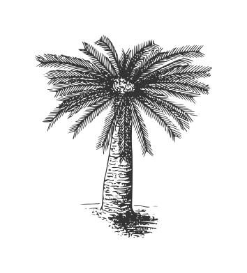 Drawn palm tree hand drawn #4