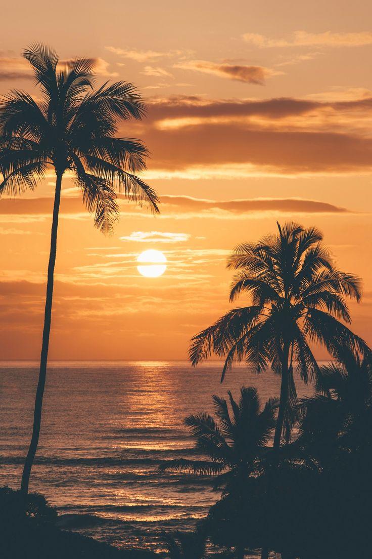 Drawn sunrise palm tree Kauai Palms 20+ pictures Palm