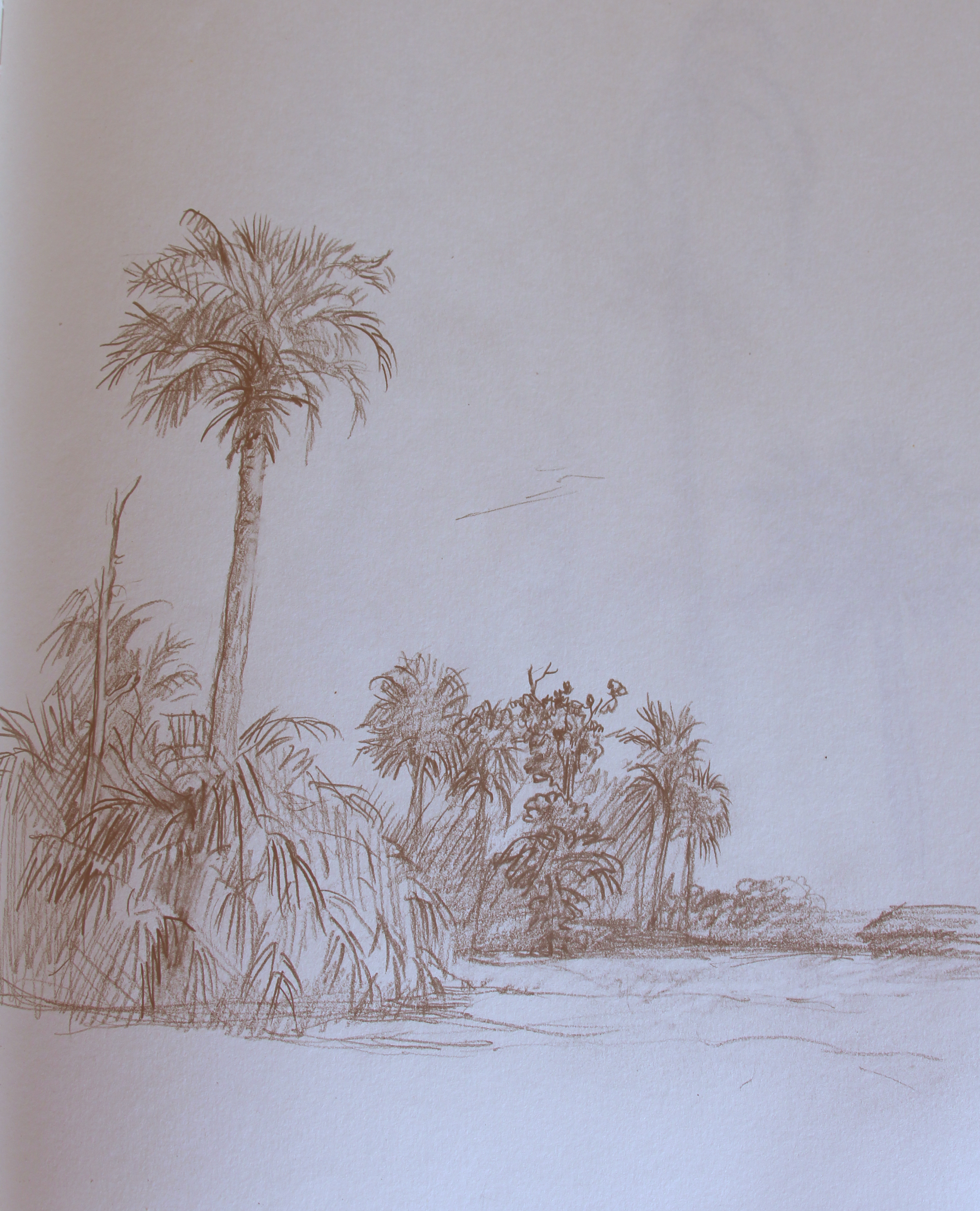 Drawn palm tree lanscape #7