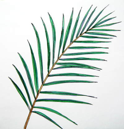 Drawn palm tree leaf How Palm picture a 2