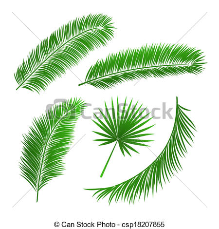 Branch clipart leave illustration Csp18207855 of leaves palm tree