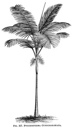 Palm Tree clipart drawn Art art and and Palm