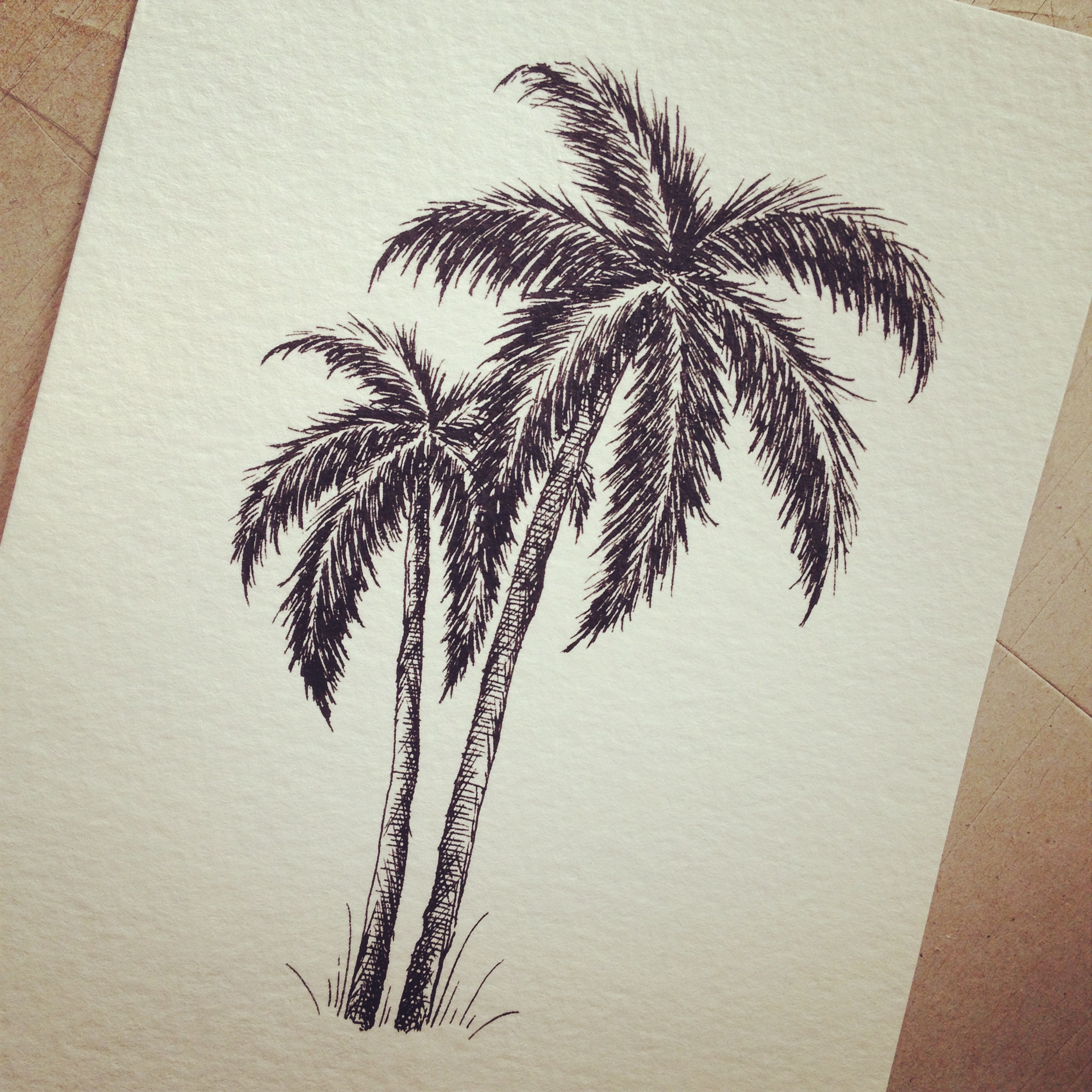Drawn palm tree pen and ink #11