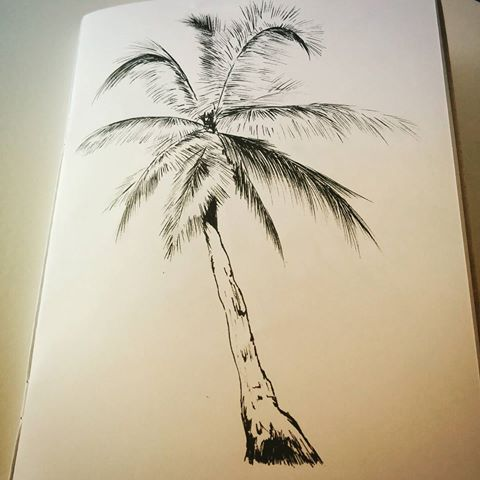 Drawn palm tree pen and ink #3