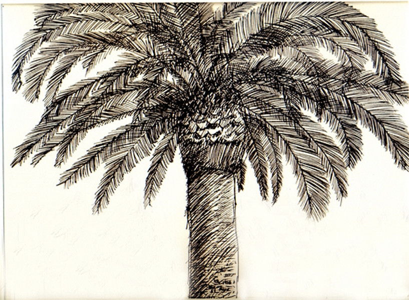 Drawn palm tree pen and ink #2