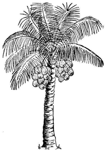 Drawn palm tree pen and ink #7